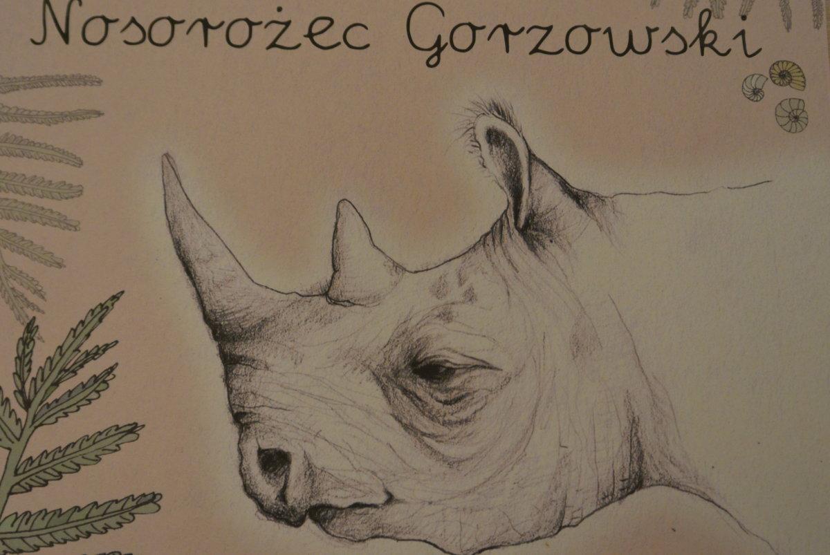 W dniach od 1 do 30 kwietnia br. ,w holu biblioteki, można oglądać ekspozycję pt.: Stefania wśród nosorożców. Jest to prezentacja książek ze zbiorów książnicy gorzowskiej przedstawiających świat nosorożców, a zainspirowana została odkryciem i promocją Stefanii-nosorożca gorzowskiego.